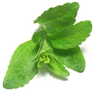 Stewia, stevia, słodzik naturalny - żywność zdrowa, żywność ekologiczna