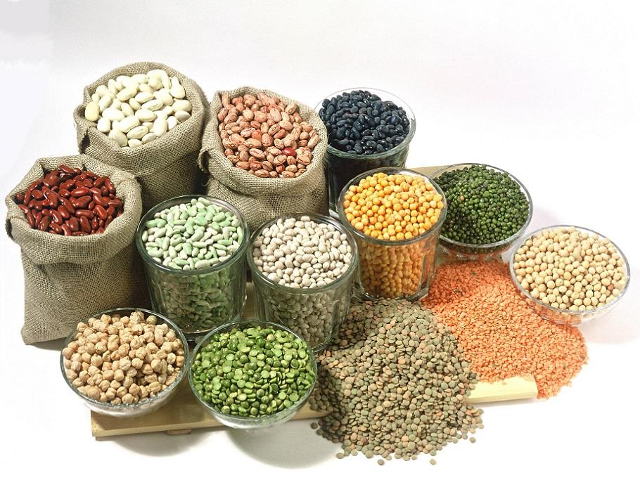 białko roślinne