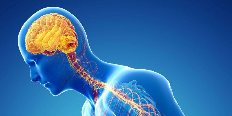 układu nerwowego