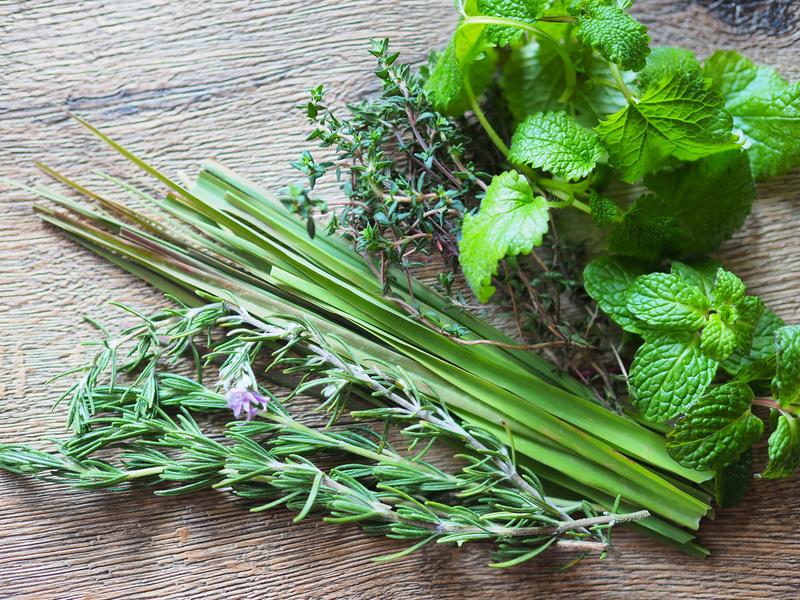 Wybrane zioła i ich właściwości