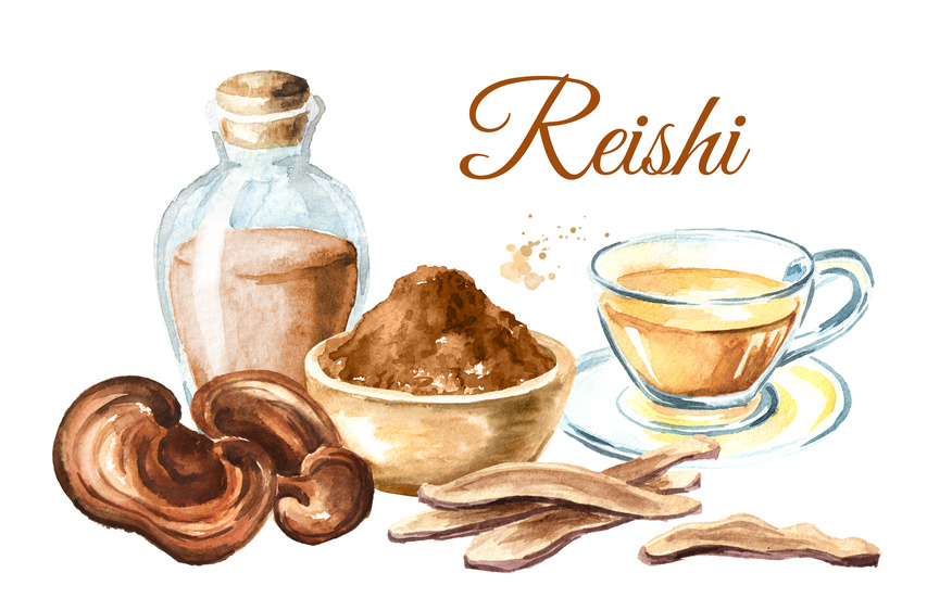 Grzyby reishi – właściwości